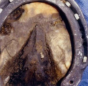 Horse Hoof Abscess after Banixx