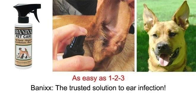dog ear & skin infection after Banixx