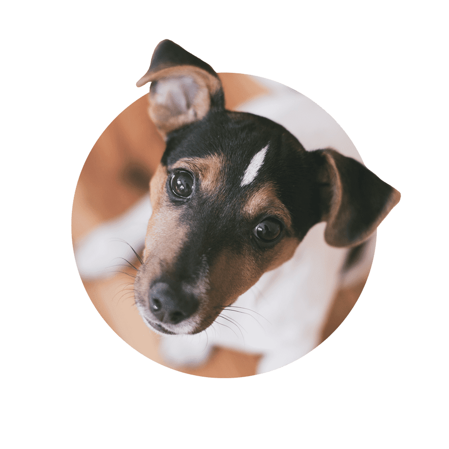 How to Treat Lacerations on Dogs advise