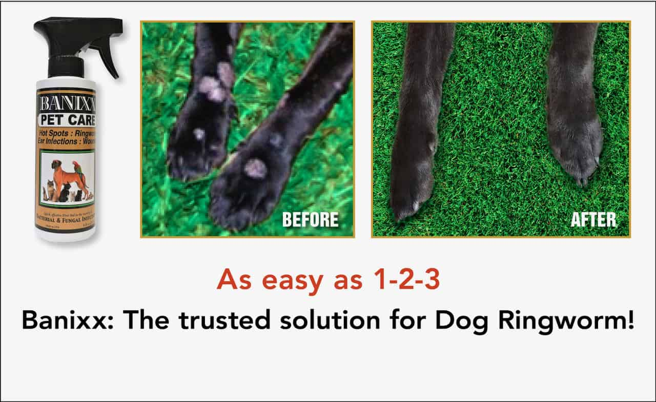 How To Treat Dogs For Ringworm Banixx Ringworm Treatment For Dogs