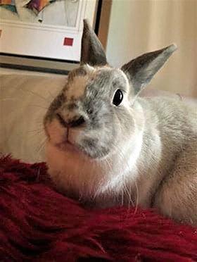 Bunny After Banixx 3