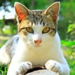 great ringworm treatment for cats