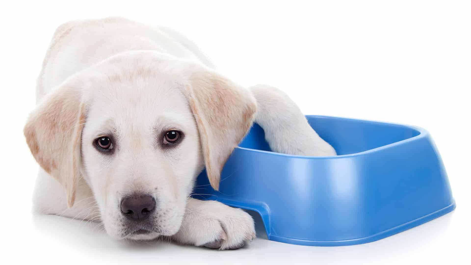 Diet Often Affects a Dog's Skin