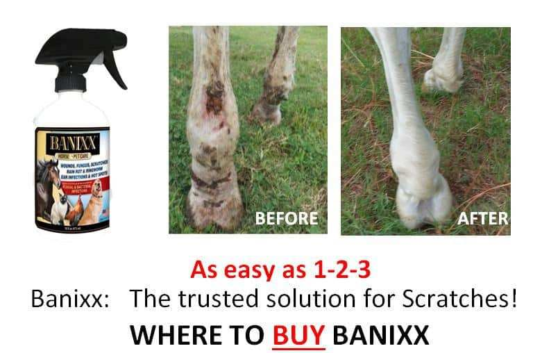 Treating Scratches with Banixx