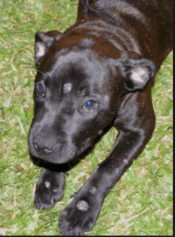 Banixx Dog Ringworm Treatment