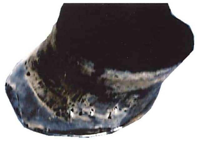 Horse White Line Disease After Banixx Treatment & 1st Shoeing