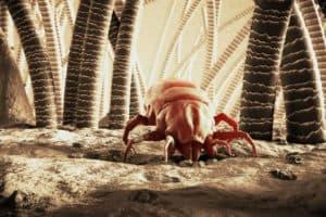 dog ear mites and fleas