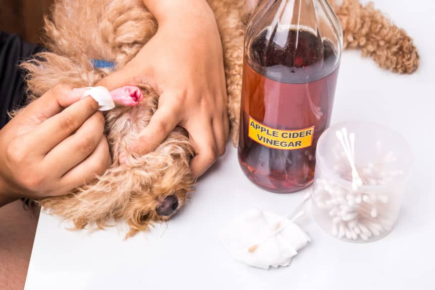 Apple Cider Vinegar For Dogs Ears
