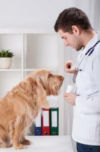 Vet Giving Dog Benadryl