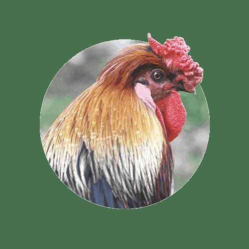 Banixx for Birds