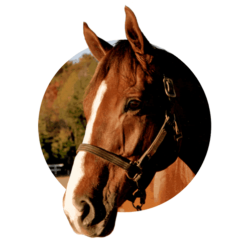 Banixx for Horses