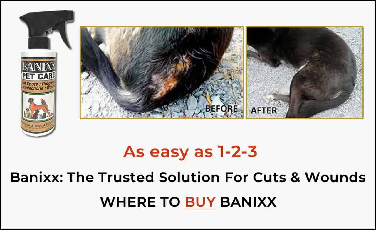 Banixx is the trusted solution for cuts and wounds on dogs