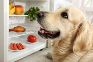 Dog Food Allergies Hot Spots