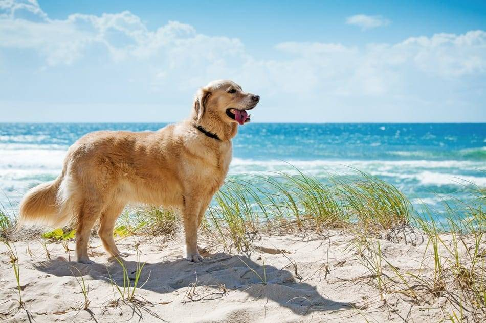 Dog's can get a hot spot after a trip to the beach.