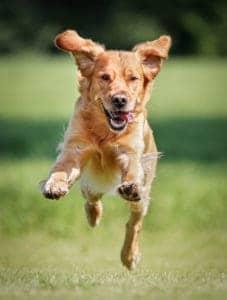 dog running to burn off energy