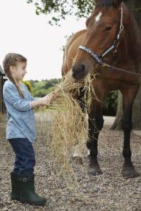 barn fire orevention hay