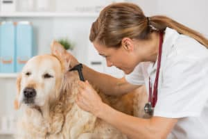 veterinarian care for dog ear infections