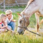 horse foraging