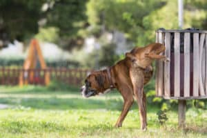 how long can a dog go without peeing?