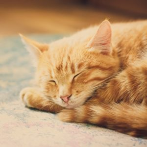 cat ear infection home remedies