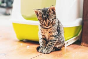 cat not peeing in litter box