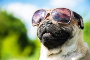 dog heat rash