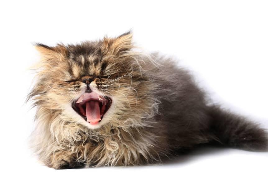 cat sneezing