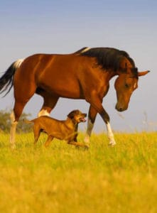 horse and dog running