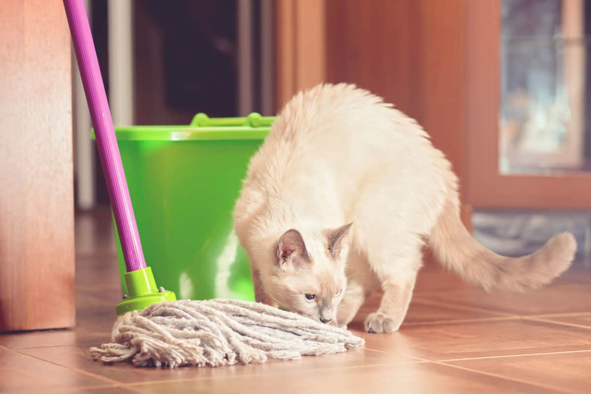 household cleaners cat