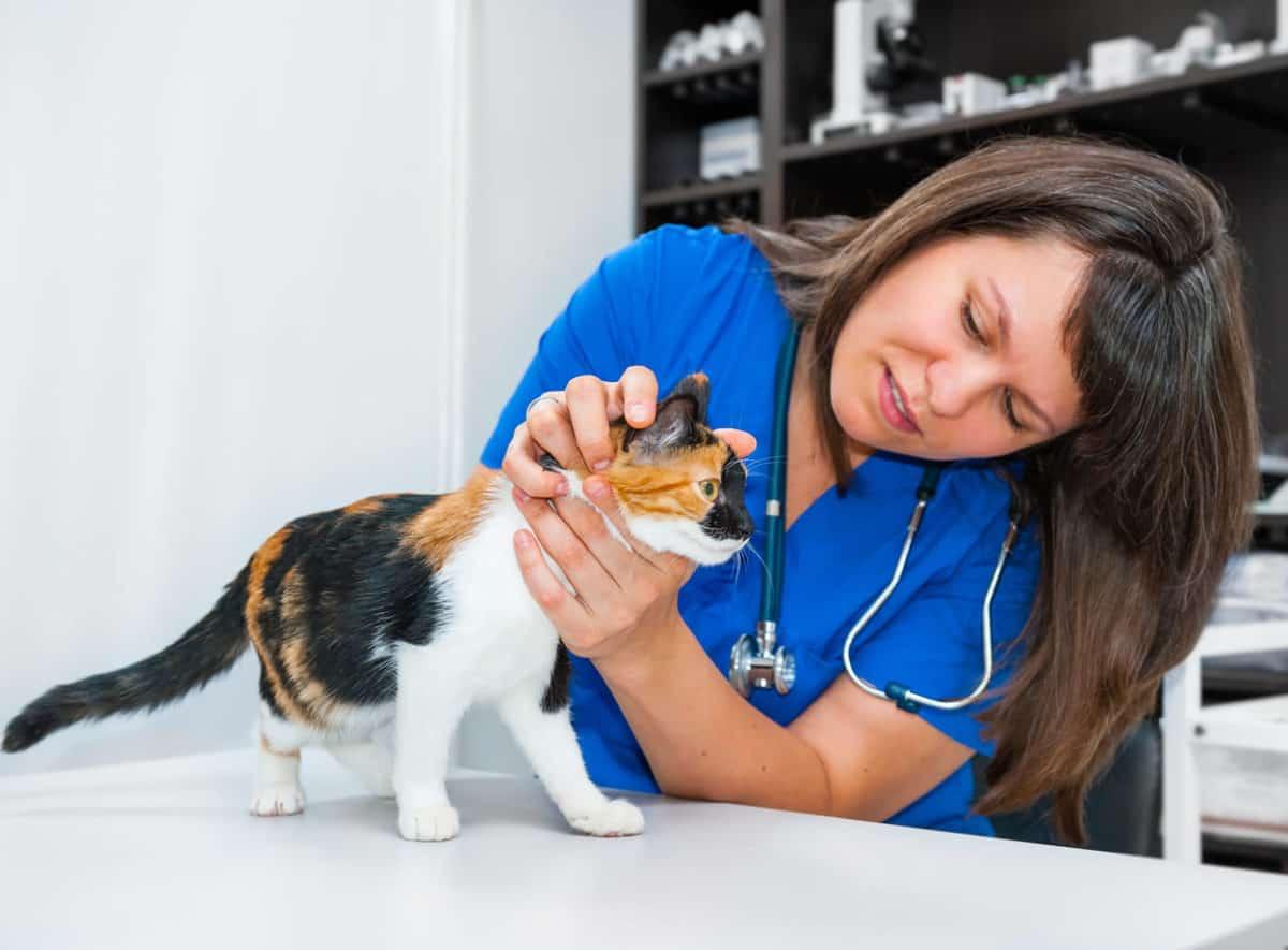 quarantine cat with ringworm