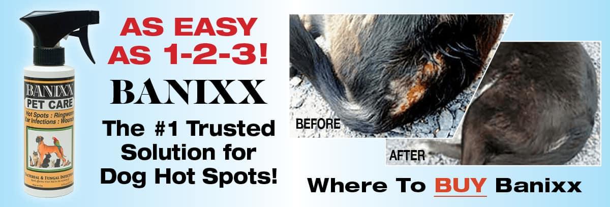 dog hot spots treatment