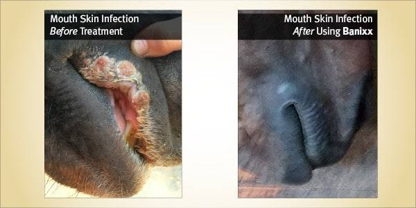 horse skin allergy/infection