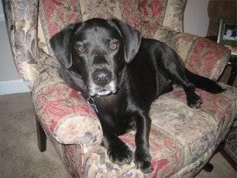 dog injury, infection after Banixx