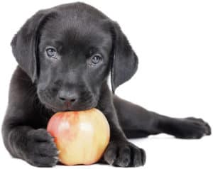 dog eat apple core