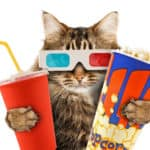 cats and popcorn