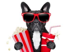 dogs eating popcorn
