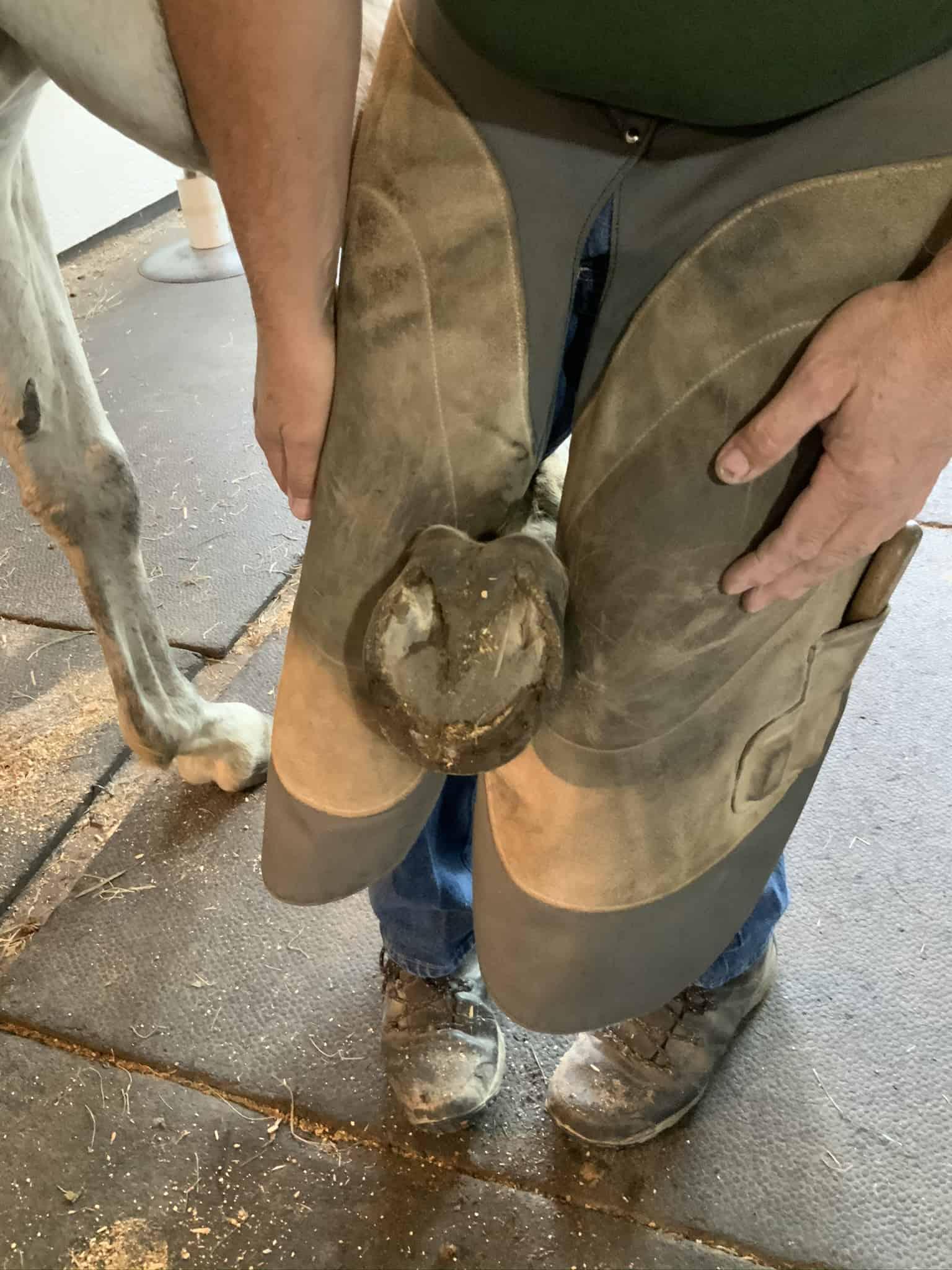 banixx results on horse thrush