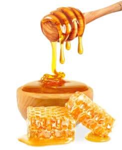 dog eat honey