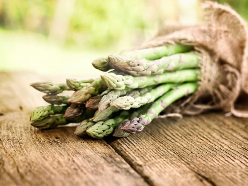 dog eating asparagus