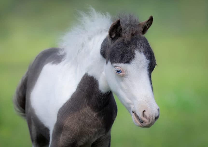einstein horse