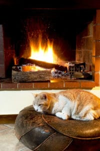 cat fireplace