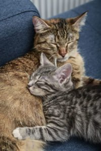 purring cats
