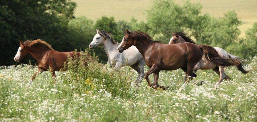 fast horses