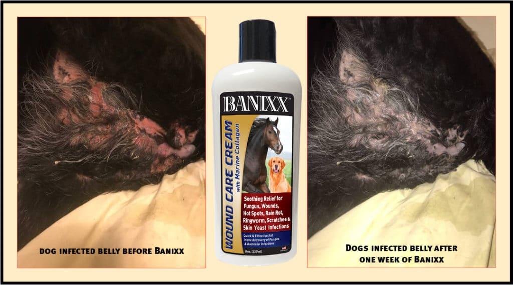 banixx wound care cream for hot spot on dog