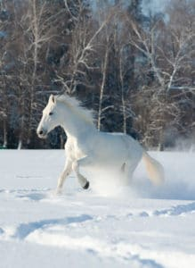 weight of horse in snow