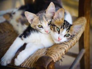 cats peanuts