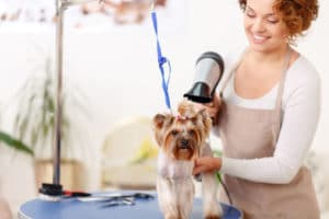 dog grooming blow drying