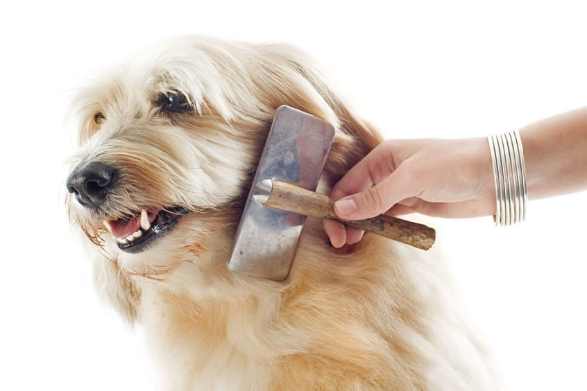 Dog being combed