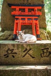 Japanse Cat