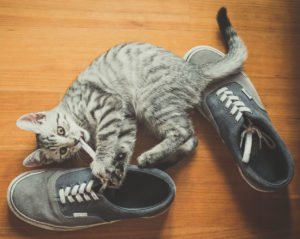 cat playing shoes